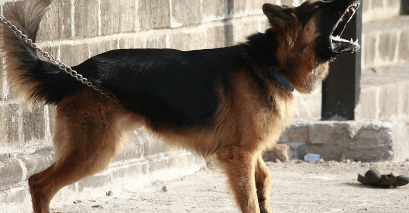 how to stop a dog from barking dog breeds picture