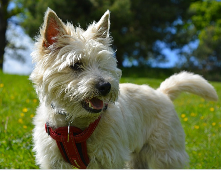 Best Small Dog Breeds For Apartments