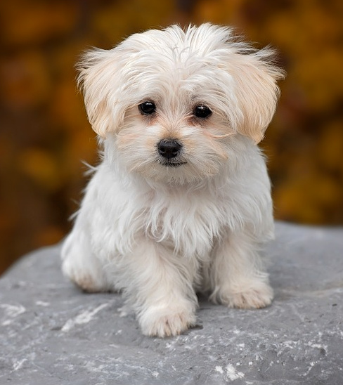 Small dog breeds for Best dog breed for you