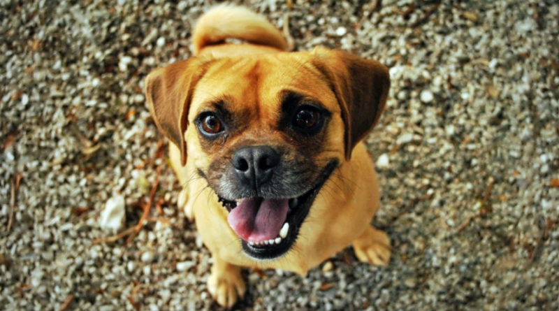 Small Crossbreed Dog Adoption